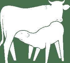 Jungzüchter im südtiroler Rinderzuchtverband