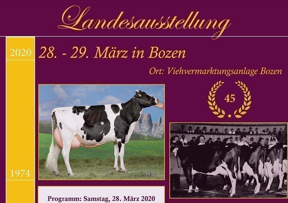 Landesausstellung der Grauvieh- und Holsteinrasse