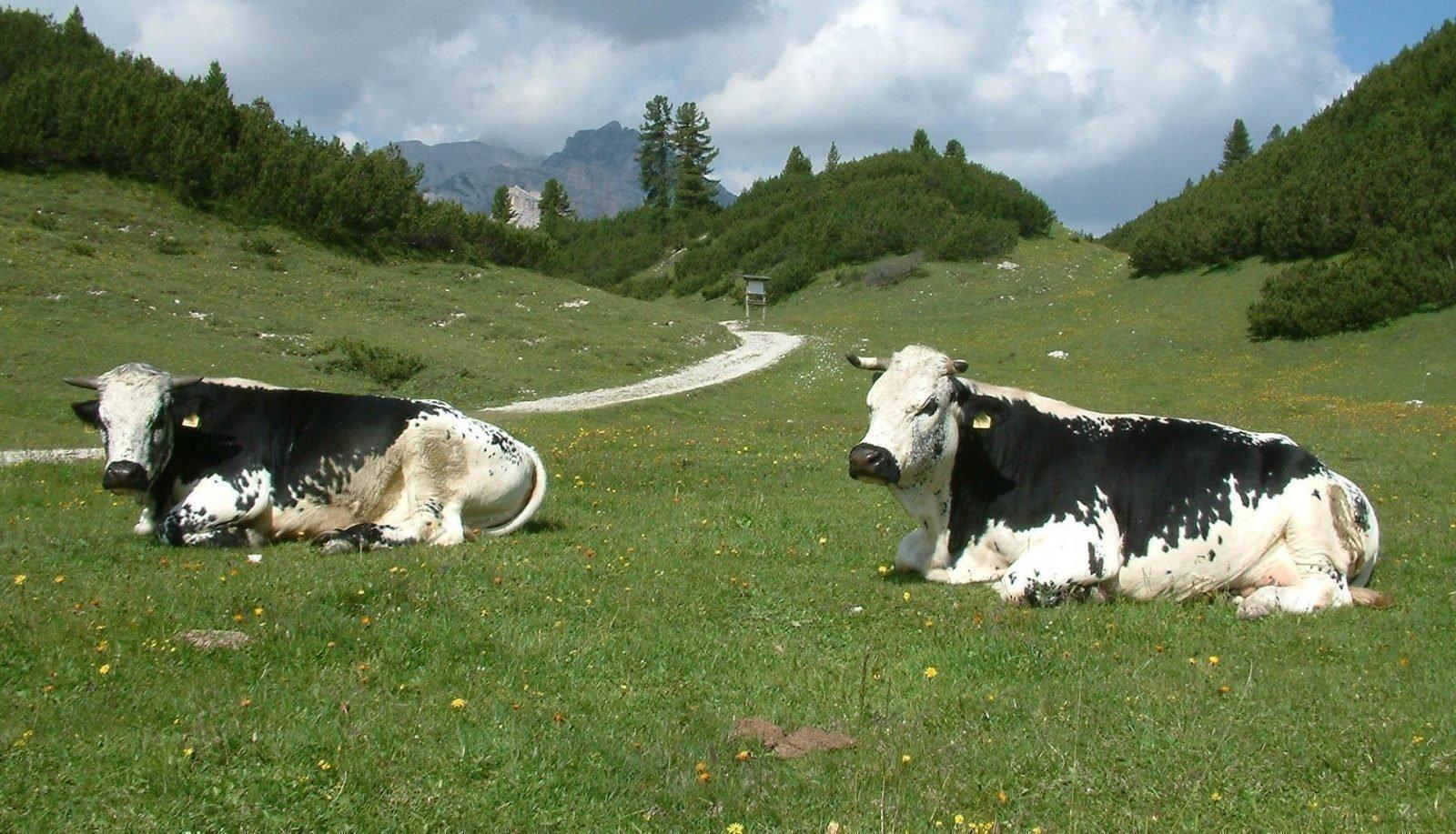 Rinderzuchtverband Südtirol